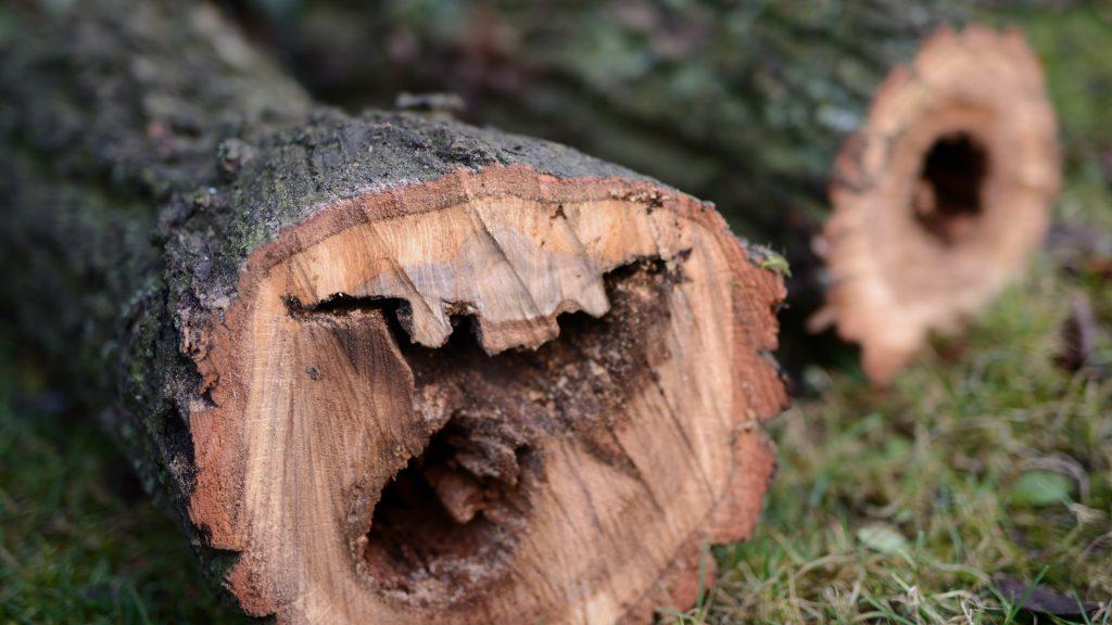 Baum fällen S80_1845-Bardowick