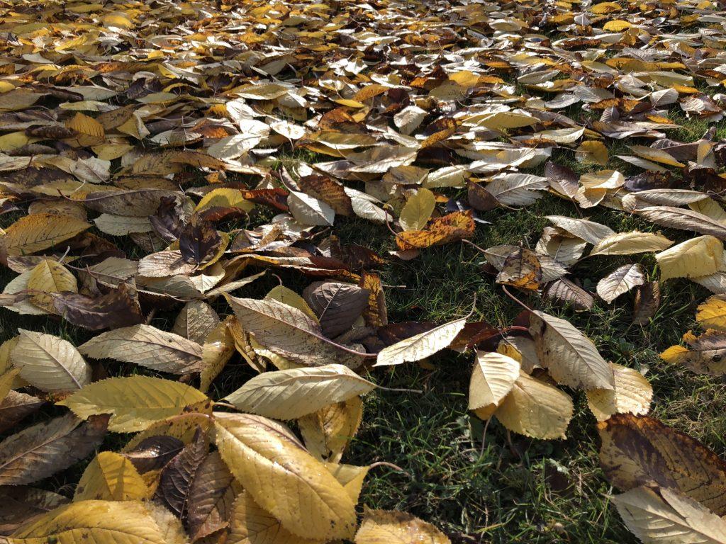 Herbstlicht img_1499.jpg